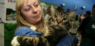 VI-VIII Международная выставка породистых кошек