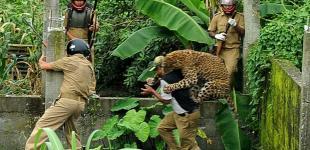 Люди против леопарда