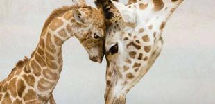Маленькие зверята с родителями
