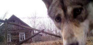 Дикий Чернобыль