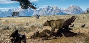 Лучшие фото по версии National Geographic