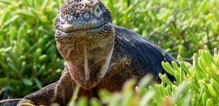 Галапагосский конкурс фотографии - BBC