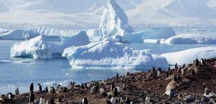 Пінгвіни, тюлені та крижана краса: екологи показали морське життя в Антарктиці