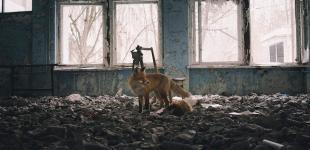На британском фотоконкурсе дикой природы один из фаворитов - снимок из Припяти
