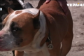 Четыре дня без еды и воды: в Кривом Роге спасли брошенную хозяином собаку