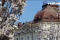 В Хмельницком и Черновцах зацвели сакуры
