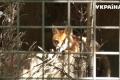 В Луцком зоопарке не хватает места для новых жителей