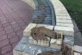 Лавочки и парапеты Оболонской набережной измазали солидолом