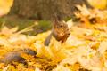 Синоптики показали погоду до конца октября