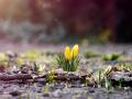 Как в Украине будет меняться температура в марте