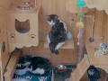 В Китае создали «умный» приют для кошек