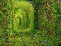 Въезд в «Тоннель любви» для туристов сделали платным