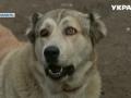 Огромные овчарки терроризируют жителей и разрывают домашний скот в Черкасской области
