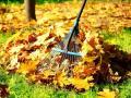 Заработок на опавших листьях: сколько платят в Украине