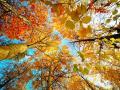 Дождей станет меньше, а тепла больше: прогноз погоды в Украине на воскресенье, 26 сентября