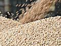 Концентратор зерновой - почему он так необходим на производстве?