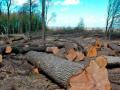 Расхищение украинского леса уйдет в прошлое – Гончарук