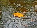 Погода на неделю: В пятницу осадки ожидаются по всей стране