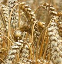 Ахметов и Новинский создали сельхозхолдинг HarvEast
