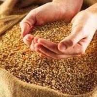Кабмин обещает не ограничивать аграриев в экспорте зерна