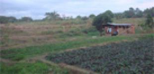 Потерять права собственности на землю по закону в Украине может каждый