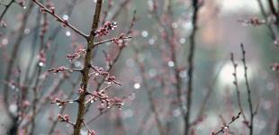 В Украине ожидается дождь, местами с мокрым снегом