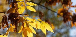 Пик сентябрьских холодов в Украине сменит ощутимое потепление: ждать уже недолго