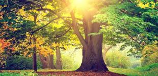 Украинцам обещают солнечное и теплое начало недели
