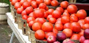 Украинскими яблоками и томатами заинтересовались в Сингапуре и Малайзии