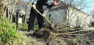 Украинцы предпочитают отдыхать на собственных огородах — опрос