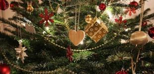 Новый год 2020: лесники уже озвучили цены на елки