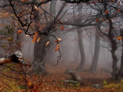 Сегодня в Украине до 9 ° тепла, местами мокрый снег и дождь
