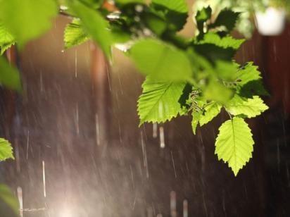 Синоптики прогнозируют жаркую пятницу с кратковременными дождями