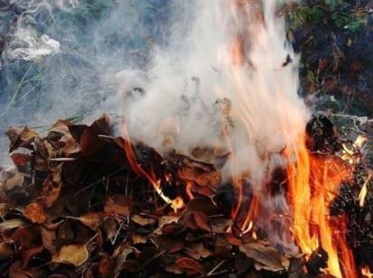 В Виннице начали штрафовать за сжигание травы и листья