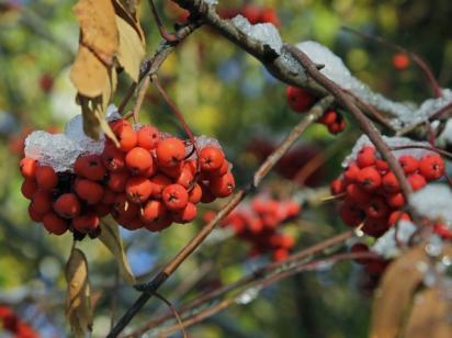 """Морозы в октябре и снег с """"бабьим летом"""" в ноябре: синоптик предупредил о погодных аномалиях осенью"""
