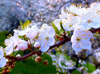 Погода на весну 2021 в Украине. Прогноз на март, апрель и май