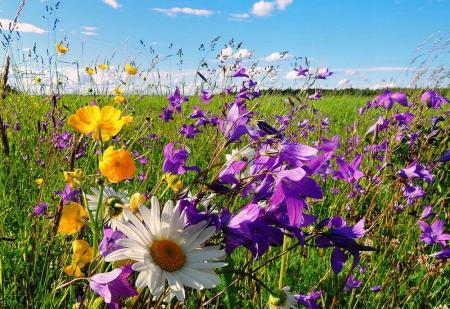 В ближайшие сутки в Украине ожидается жаркая сухая погода