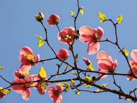 Весну в Украине придется еще немного подождать