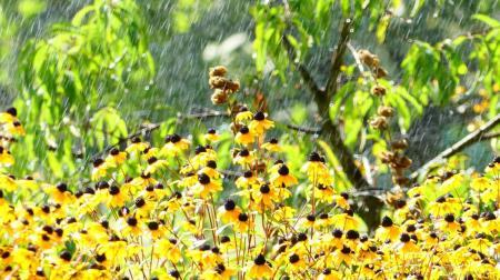 Тропические ливни и волны аномальной жары: август принесет очередные погодные сюрпризы