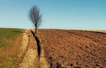 Рынок земли: в бесконечном ожидании верховенства права
