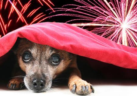 Что может случится с собакой после Нового года: ответ эксперта