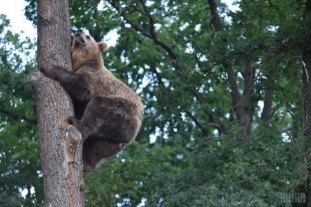 На Прикарпатье местные встретили медвежонка на свалке