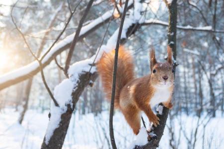 В Украину после 14 февраля вернутся морозы