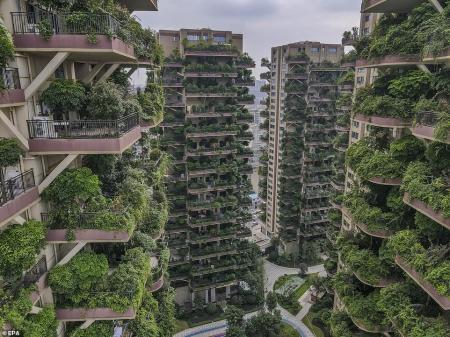 Китайский проект жилья с лесом на балконе погубили комары