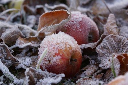 В Украину идут сильные заморозки: какие области под угрозой