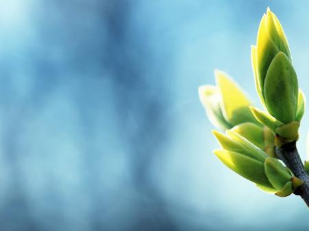 2015Nature___Plants_Spring_bloom_buds_100576_29_03.03.21