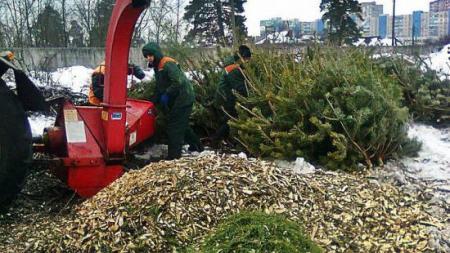 Пункты приема елок в Киеве будут работать до 1 февраля