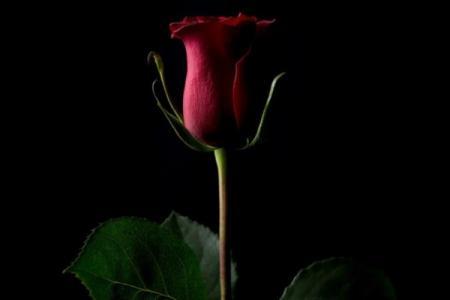 Цифровой снимок розы продали за $1 миллион в криптовалюте