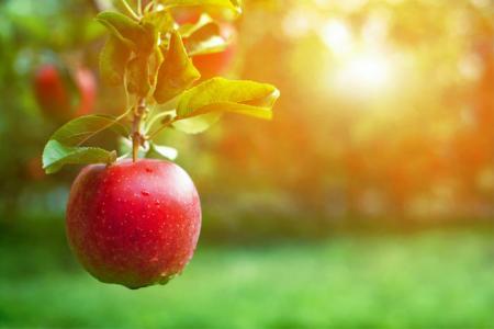 На что способно одно съеденное в день яблоко
