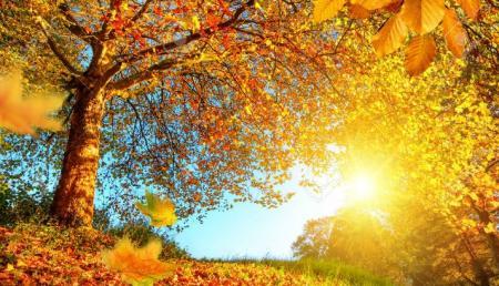 Погода на неделю: В Украине будет переменно солнечно и без осадков